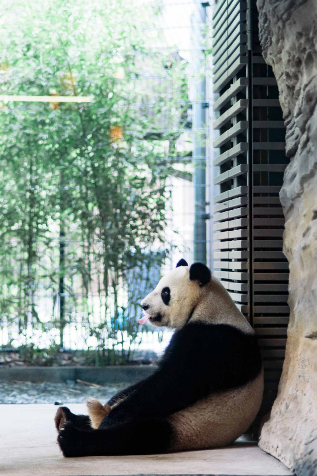 One of Berlin's panda bears.