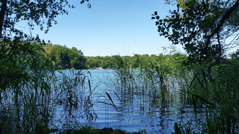 Reeds at Liepnitzsee lake.