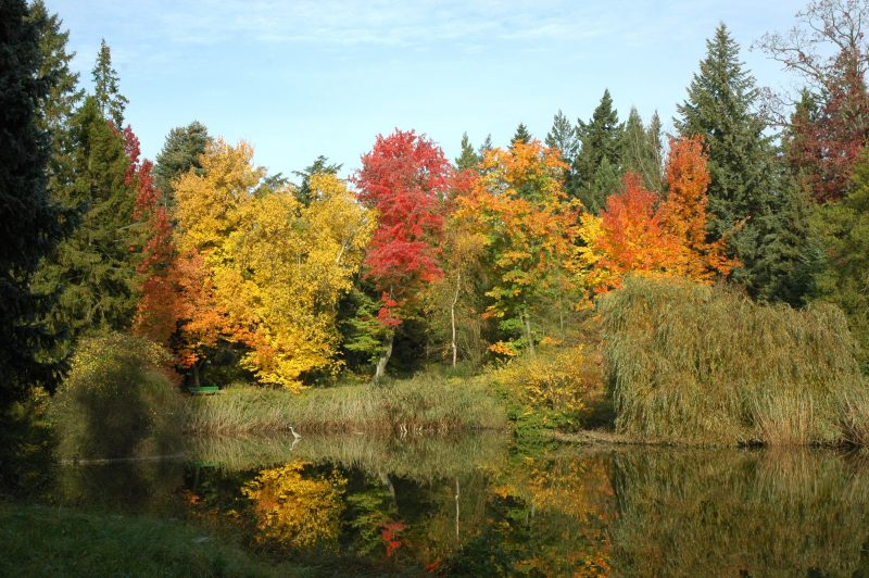 View of the Amerikasee of the Botanical gardens Berlin in autumn.