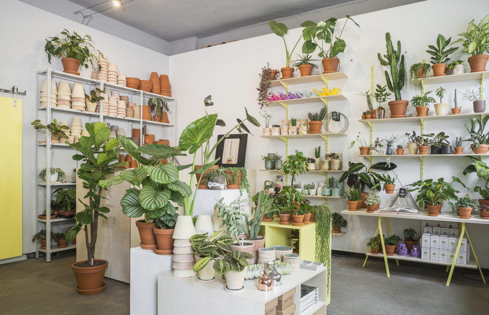 Pflanzen kaufen Berlin Hipper Shop im Herzen Kreuzbergs: The Botanical Room ist eine gute Adresse, wenn man eine besondere Zimmerpflanze sucht.