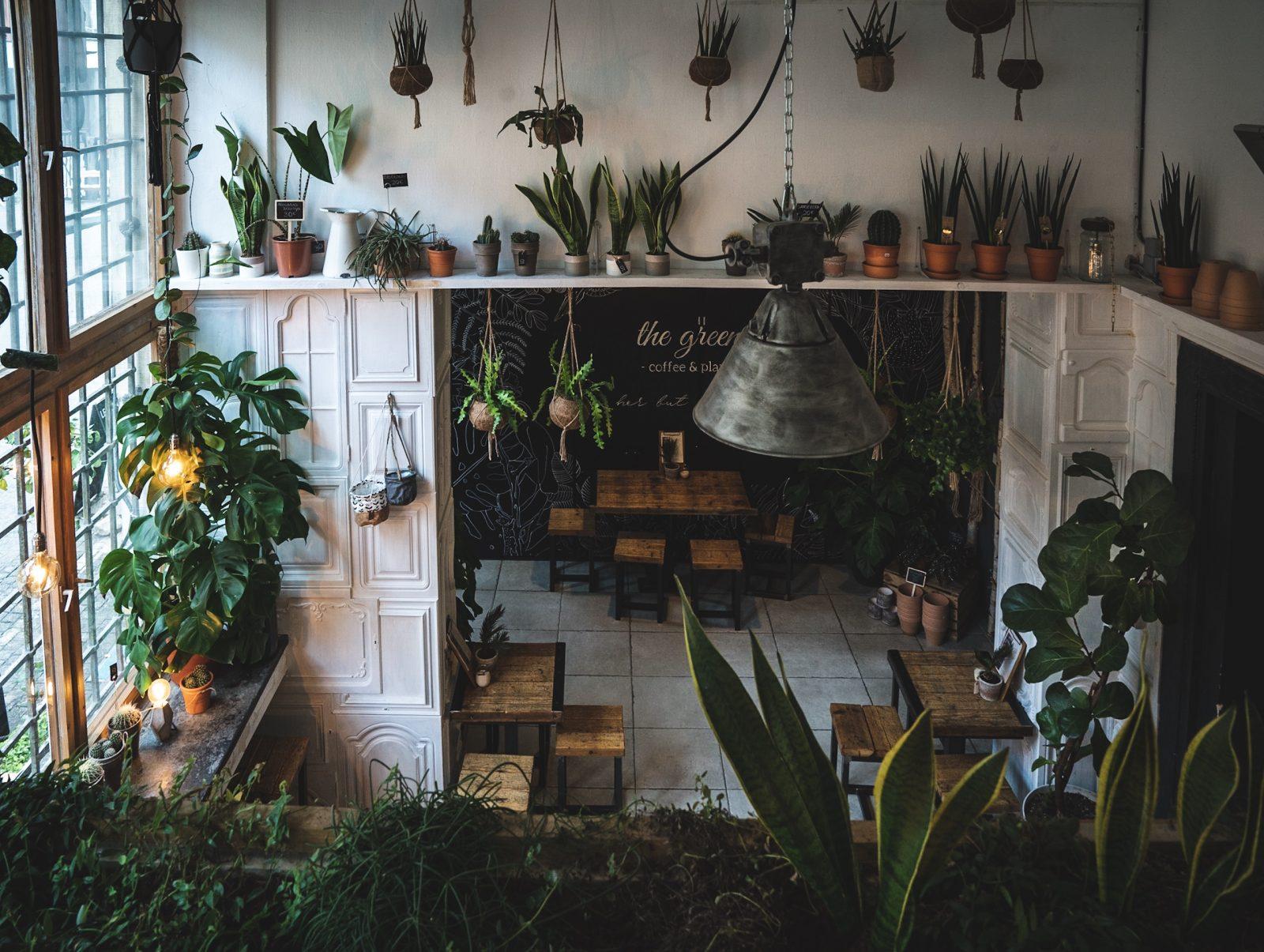 Pflanzen kaufen Berlin Pflanzenladen und Café in einem: The Greens am Krögel ist ein Eldorado für Kaffee- und Pflanzenliebhaber*innen.