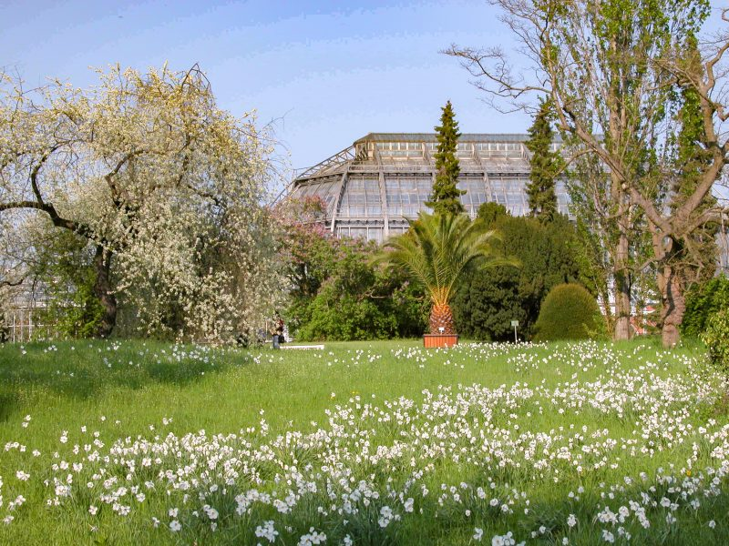Der Botanische Garten Berlin öffnet wieder, zumindest teilweise. Die Außenanlagen sind wieder geöffnet, ein Ticket muss man vorher im Internet kaufen. Foto: I. Haas/BGBM