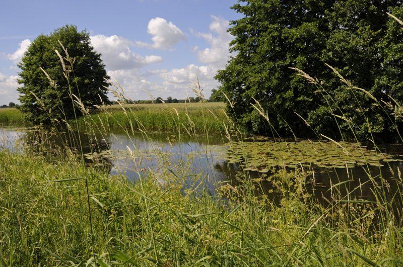 Der Fluss Karthane bei Bad Wisnack (Prignitz) im Biospärenreservat Flusslandschaft Elbe-Brandenburg.    Foto: imago/Hohlfeld