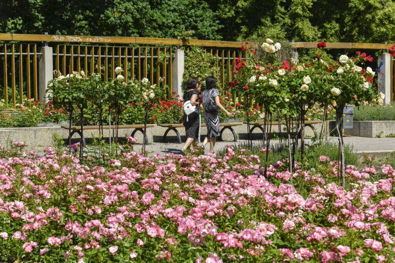 Der Rosengarten ist ein beliebtes Ziel für viele Besucher des Parks.    Foto: Imago/Schöning