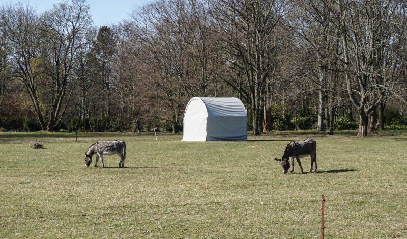 Auch wilde Tiere tummeln sich im Britzer Garten. Sie sind die Nähe zu Menschen gewohnt und daher entspannt.