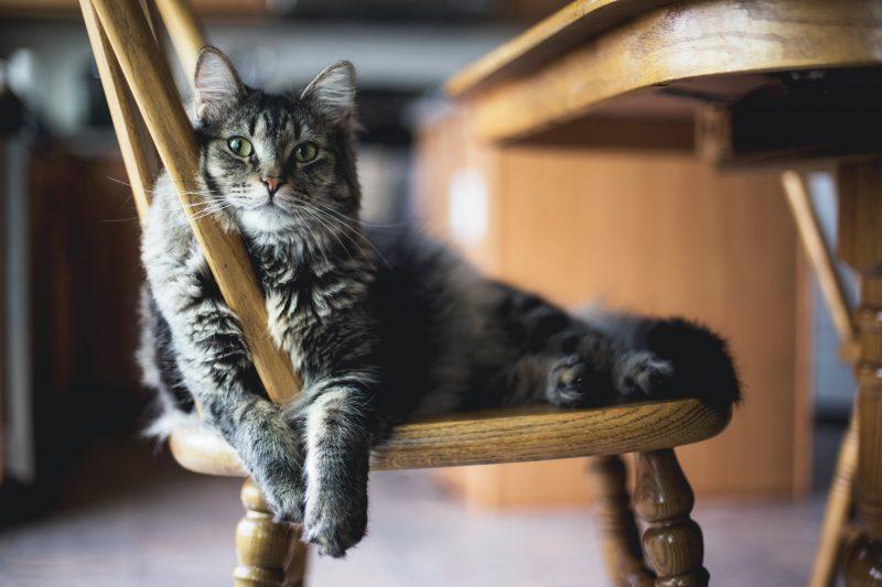 Haustiere sind toll, helfen bei Einsamkeit, sind jedoch auch eine große Verantwortung.