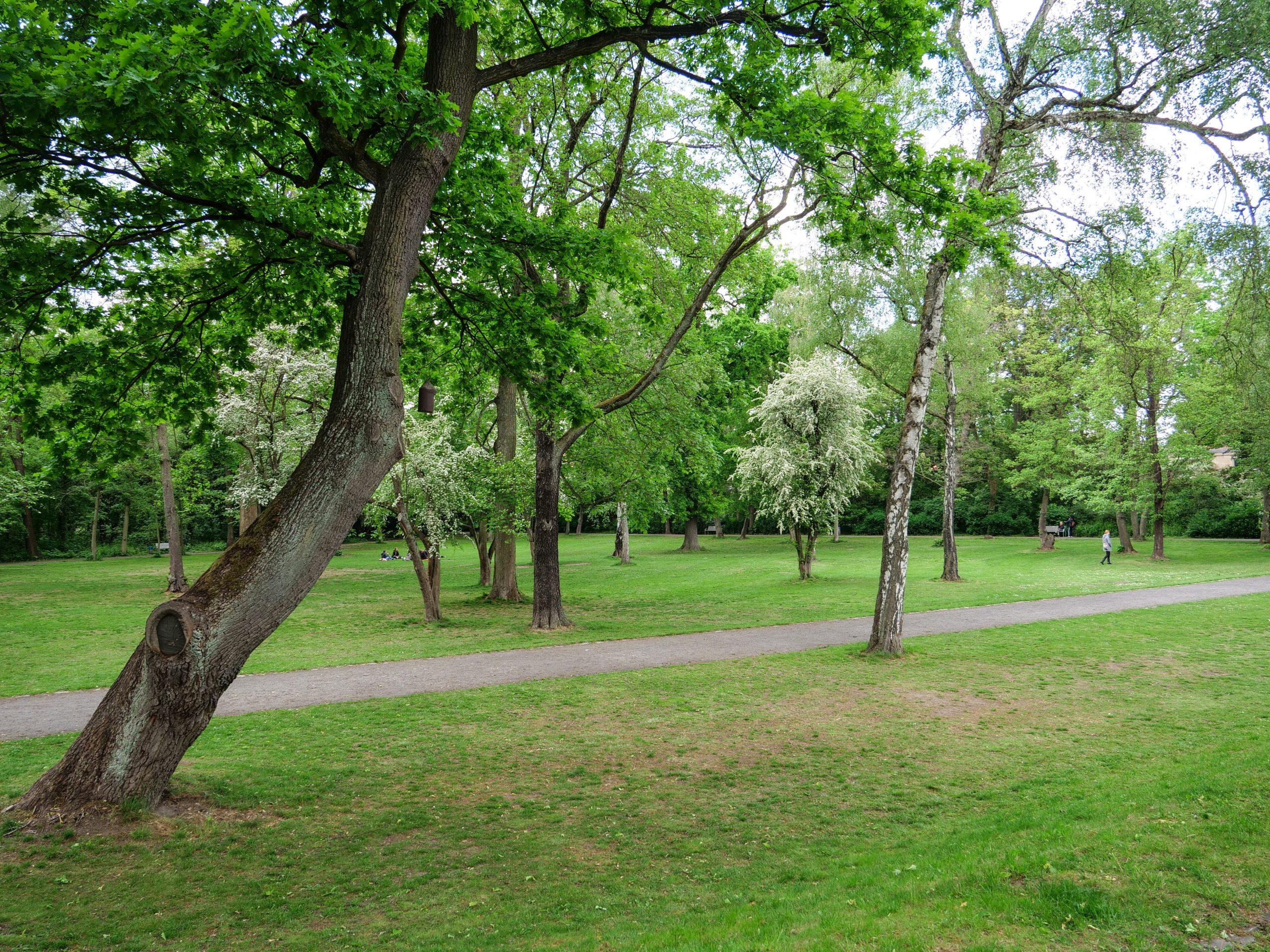 Der Erlenbusch ist ein verwunschener Park in Berlin-Dahlem.