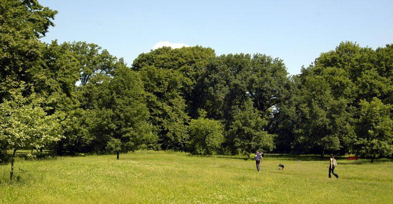 Fast windstill ist es oft auf den Wiesen in der Hasenheide, die gut von Bäumen geschützt sind.    Foto: Imago/Schöning