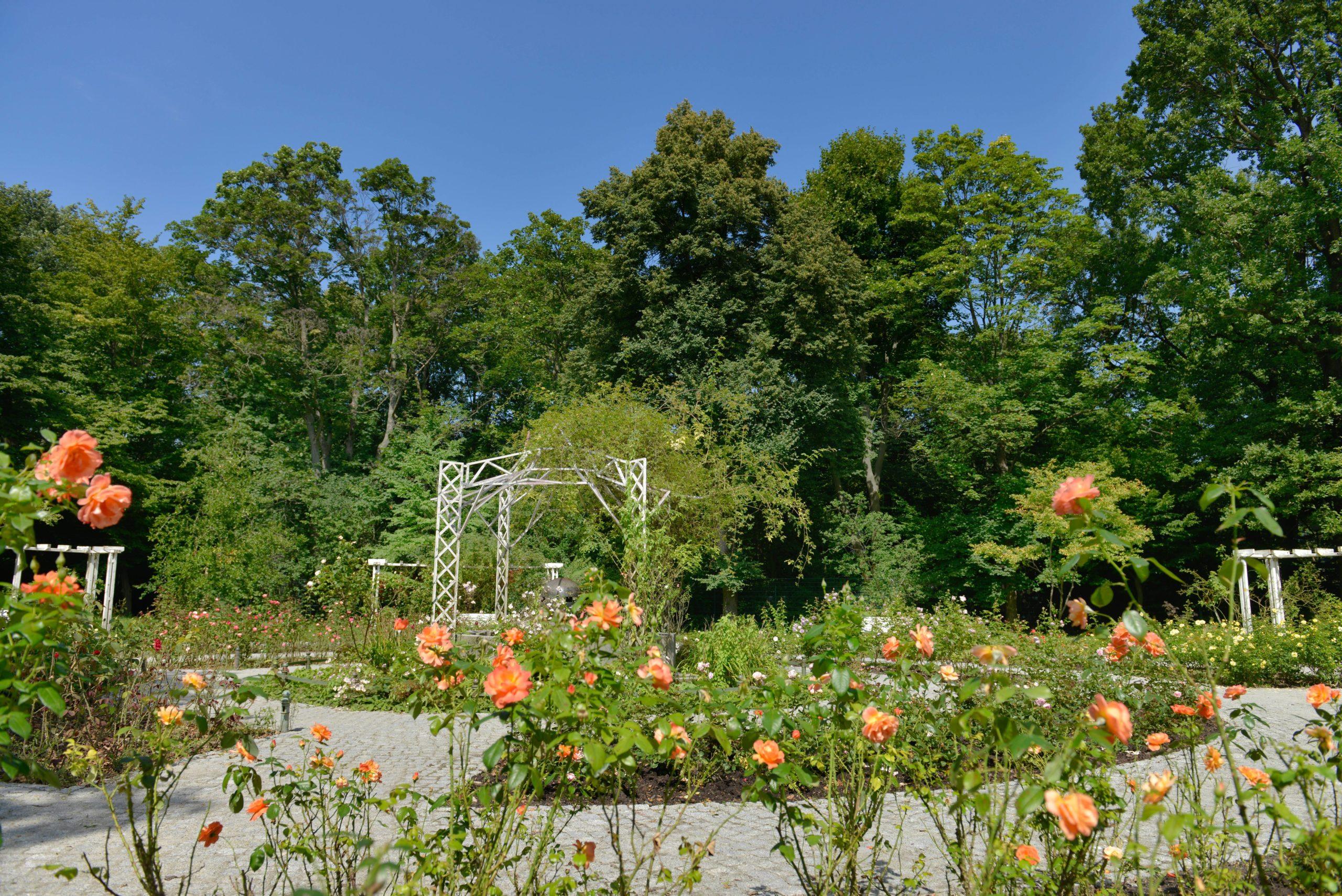 Besonderer Anblick: der Rosengarten im Volkspark Hasenheide. Foto: Imago/Schöning