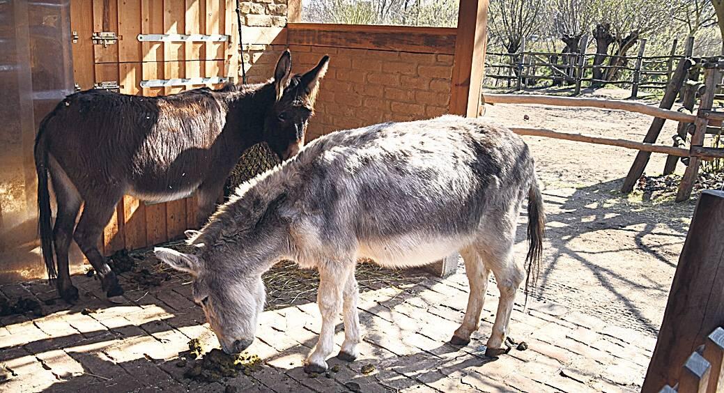 Sind die süß! Auf dem Kinderbauernhof Pinke-Panke leben Esel. Foto: Imago/Tagesspiegel