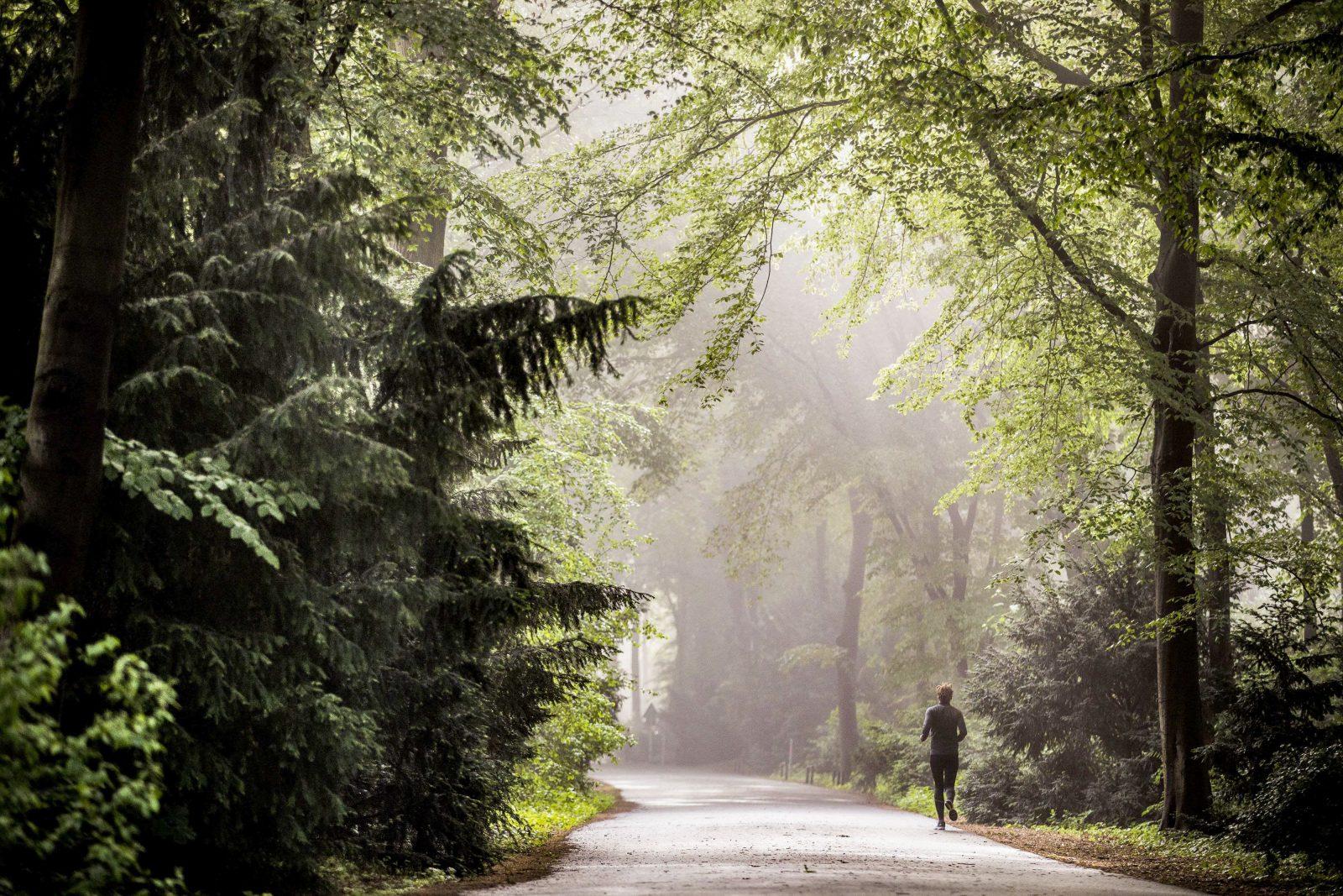 Großer Tiergarten im Nebel am Morgen: ein wunderschöner Anblick – und auch zum Joggen die richtige Zeit.     Foto: Photothek/Florian Gaertner