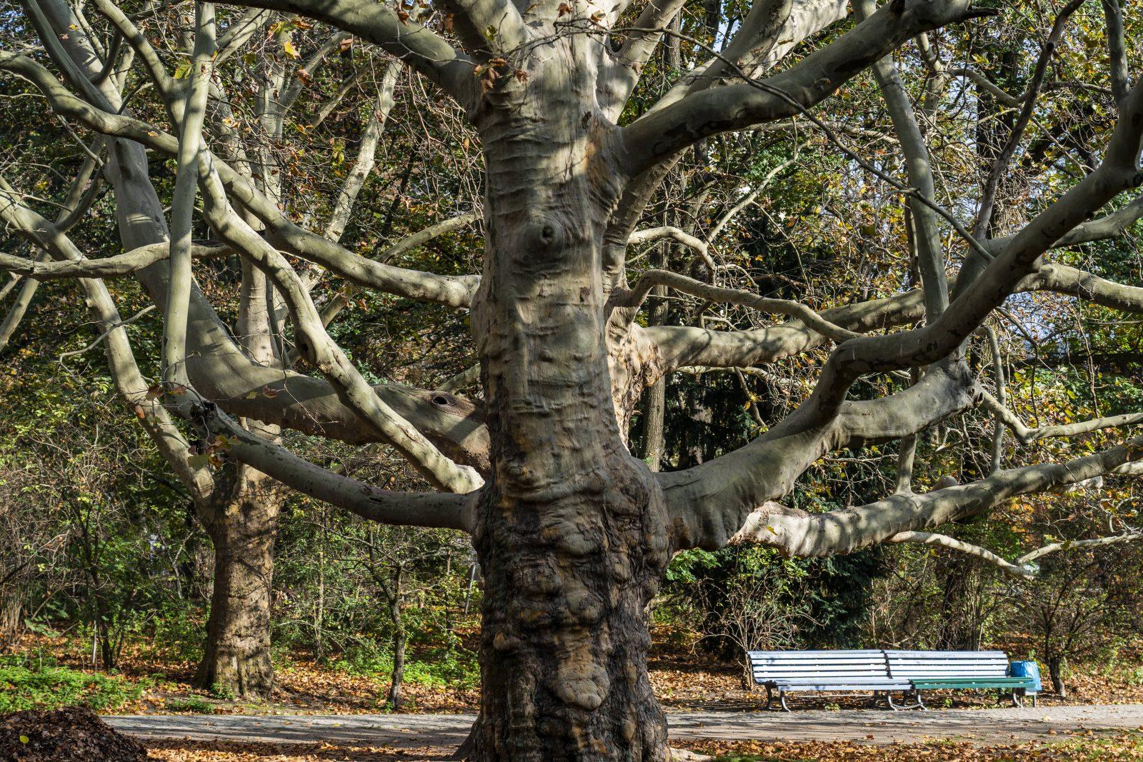 Auch im Herbst machen die alten Bäume im Park noch was her.  Foto: Imago/Hohlfeld
