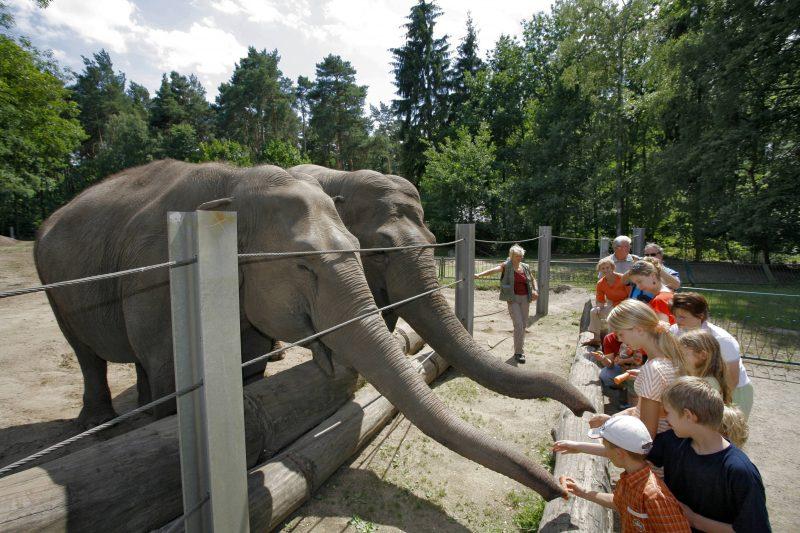 Kinder helfen bei der Elefantenfütterung im Tierpark Cottbus.
