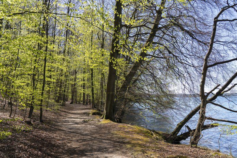 Uferweg am Werbellinsee bei Altenhof Landkreis Barnim im Biosphärenreservat Schorfheide-Chorin. Foto: imago images/Hohlfeld
