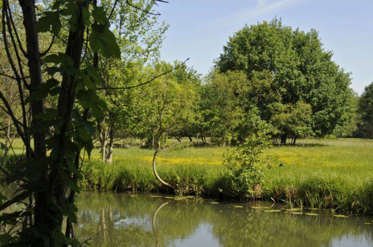 Ein Spreewaldfließ und naturbelassene Wiese bei Straupitz im Biosphärenreservat Spreewald. Foto: imago images/Hohlfeld