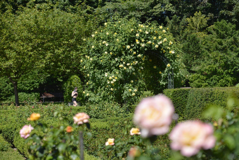 Im Sommer kann man im Volkspark Humboldthain durch einen duftenden Rosengarten spazieren.