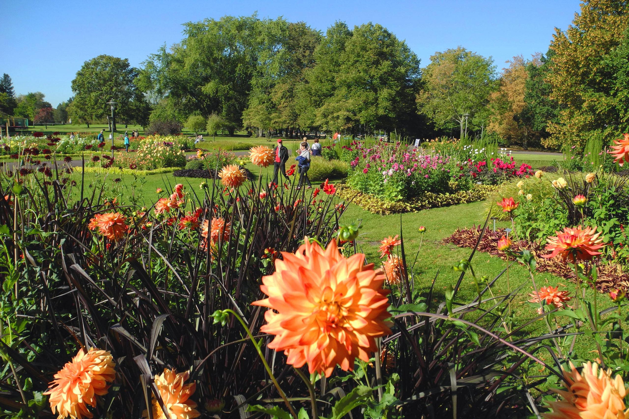 """Im Spätsommer beginnt das """"Dahlienfeuer"""" im Britzer Garten. Foto: Imago/Pemax"""