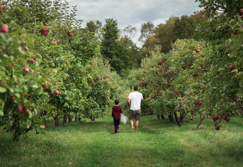 Obstwiesen in Brandenburg: Die Apfelzeit voll auskosten