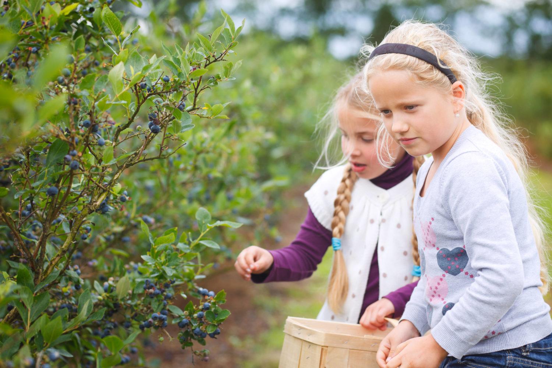 Beeren pflücken ist besonders für die Kleinen ein großes Vergnügen. Die Büsche und Sträucher sind für sie eine wahre Fundgrube - und leicht zu erreichen. Foto: imago images / Shotshop
