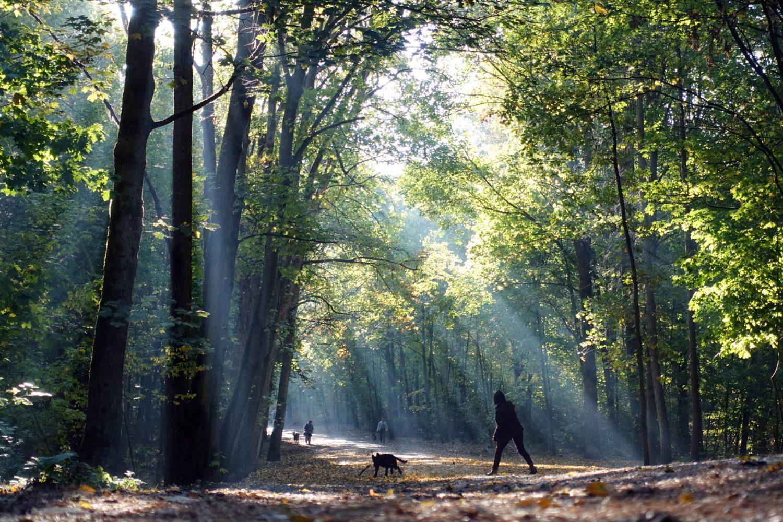 Waldspaziergang Berlin Ein Spaziergang durch den Grunewald ist vor allem mit Kindern und Hunden schön.