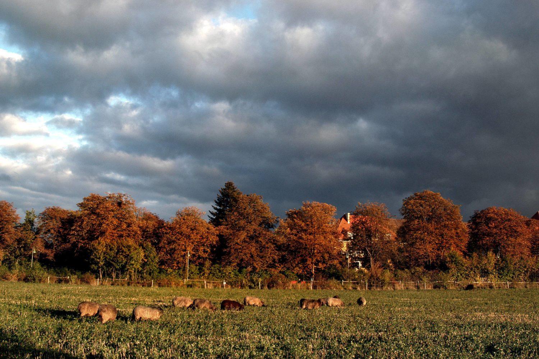 Herbst Berlin Ein Ausflug zur Domäne Dahlem in Zehlendorf lohnt sich nicht nur für Familien.