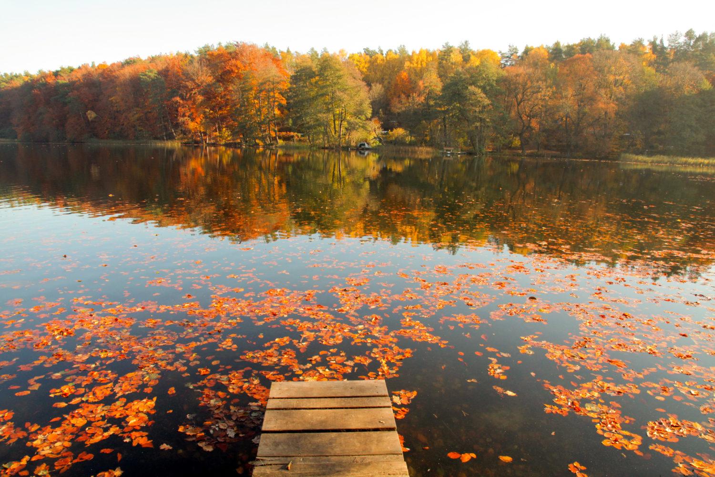 An diesen 12 Orten in und um Berlin fühlt ihr euch so richtig Herbst: Liepnitzsee
