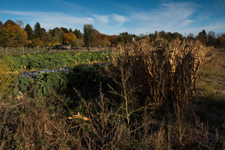Herbstzeit ist Erntezeit. Das merkt man erst so richtig, wenn man die Stadt verlässt. Foto: imago images/Uwe Steinert