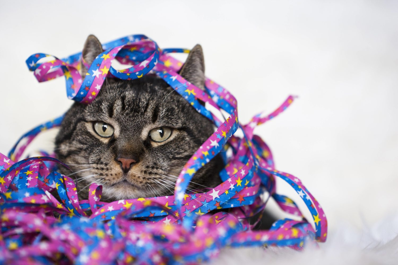 Eine Katze mit Luftschlangen auf dem Kopf blickt genervt drein.