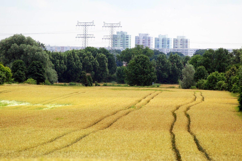 Berliner Berge: Statt über Moorlandschaft blickt man vom Mörderberg inzwischen über satte Felder. Foto: Imago Images/Ulli Winkler