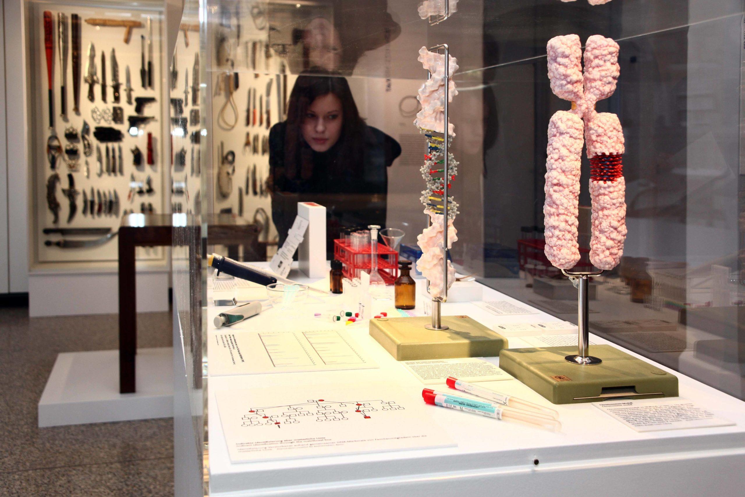 DNA- und Chromosomen-Modell im Medizinhistorischen Museum der Charité Berlin. Foto: Imago/Sabine Gudath