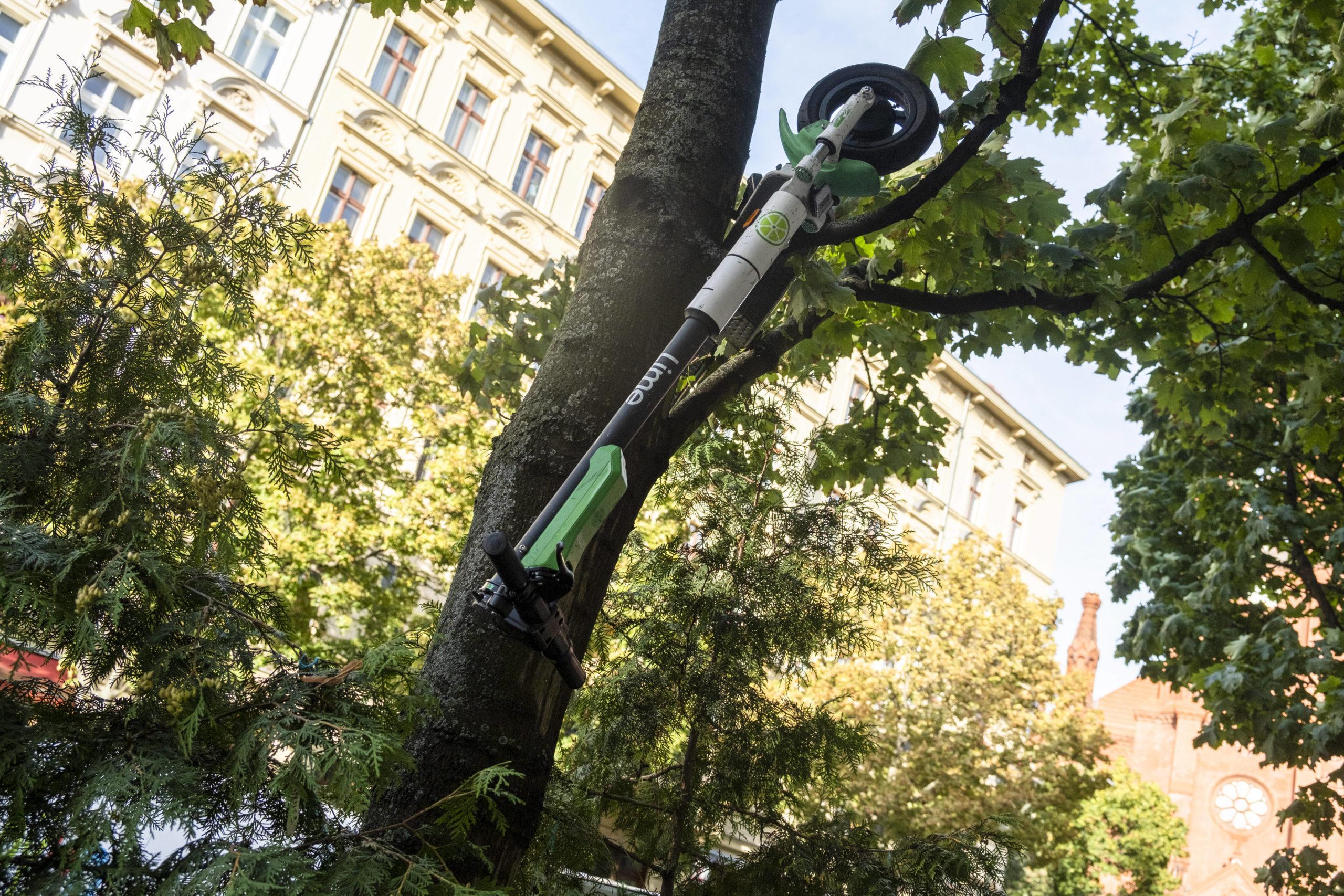 Kuriose Fotos aus Berlin: Im Baum geparkter E-Scooter von Lime in Prenzlauer Berg. Foto: Imago/Seeliger