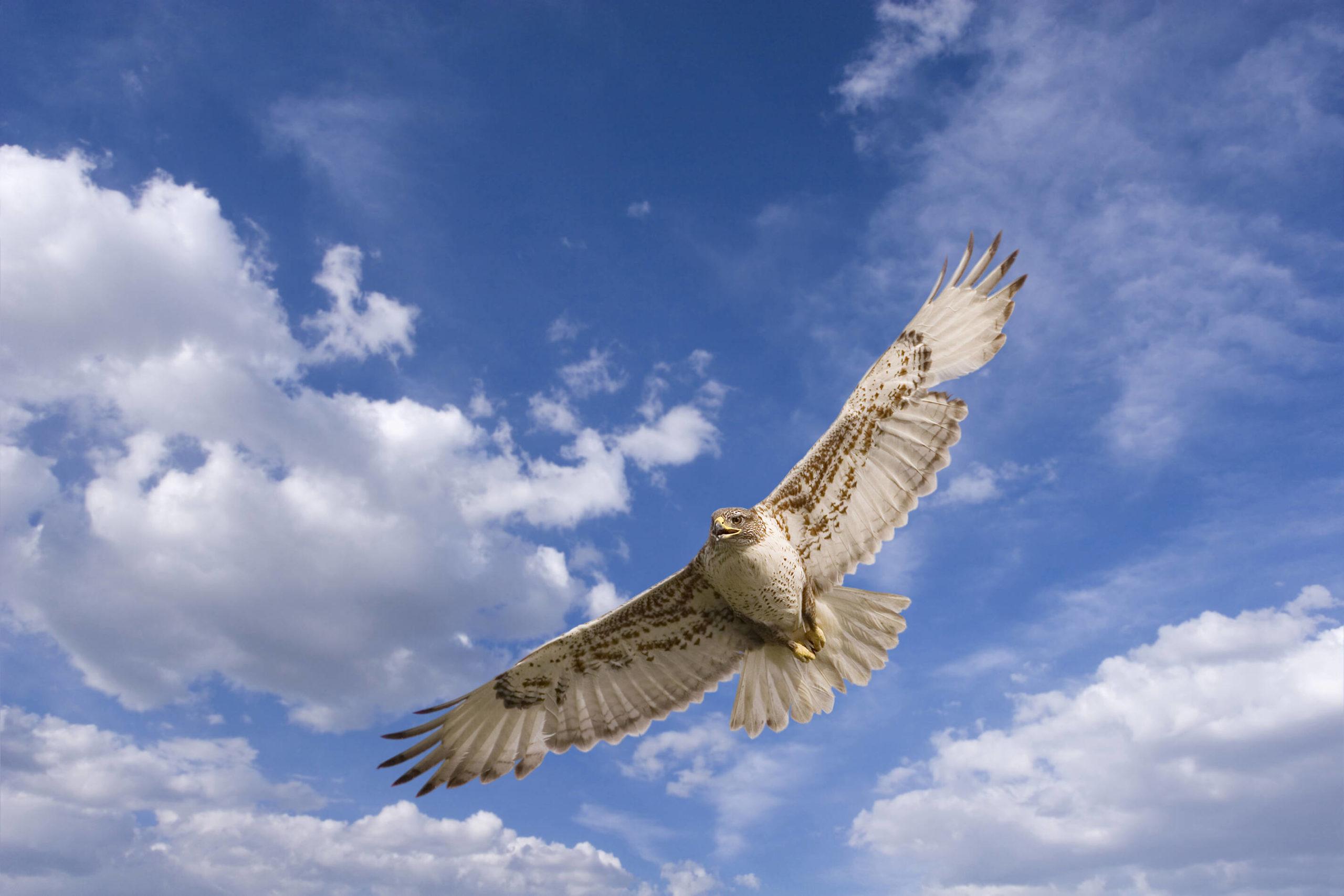 Auf dem Falkenhof Ravensberg kann man Greifvögel hautnah erleben und beim Jagen in der Luft beobachten.
