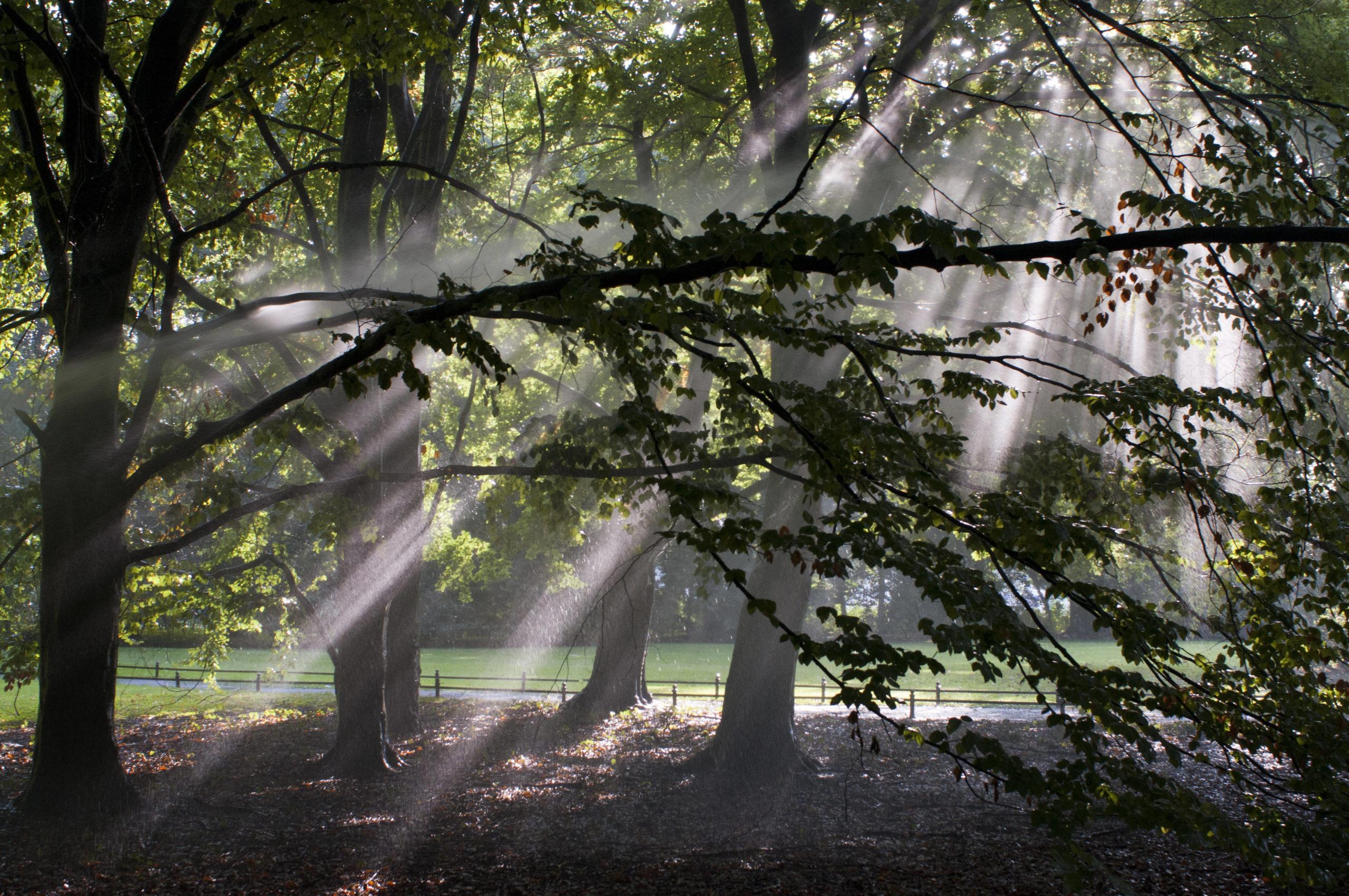 Märchen Berlin Magisches Licht: Der Große Tiergarten ist mehr als nur ein schöner Park. Im Morgengrauen haben die über 200 Hektar Wald und Wiesen etwas Magisches.