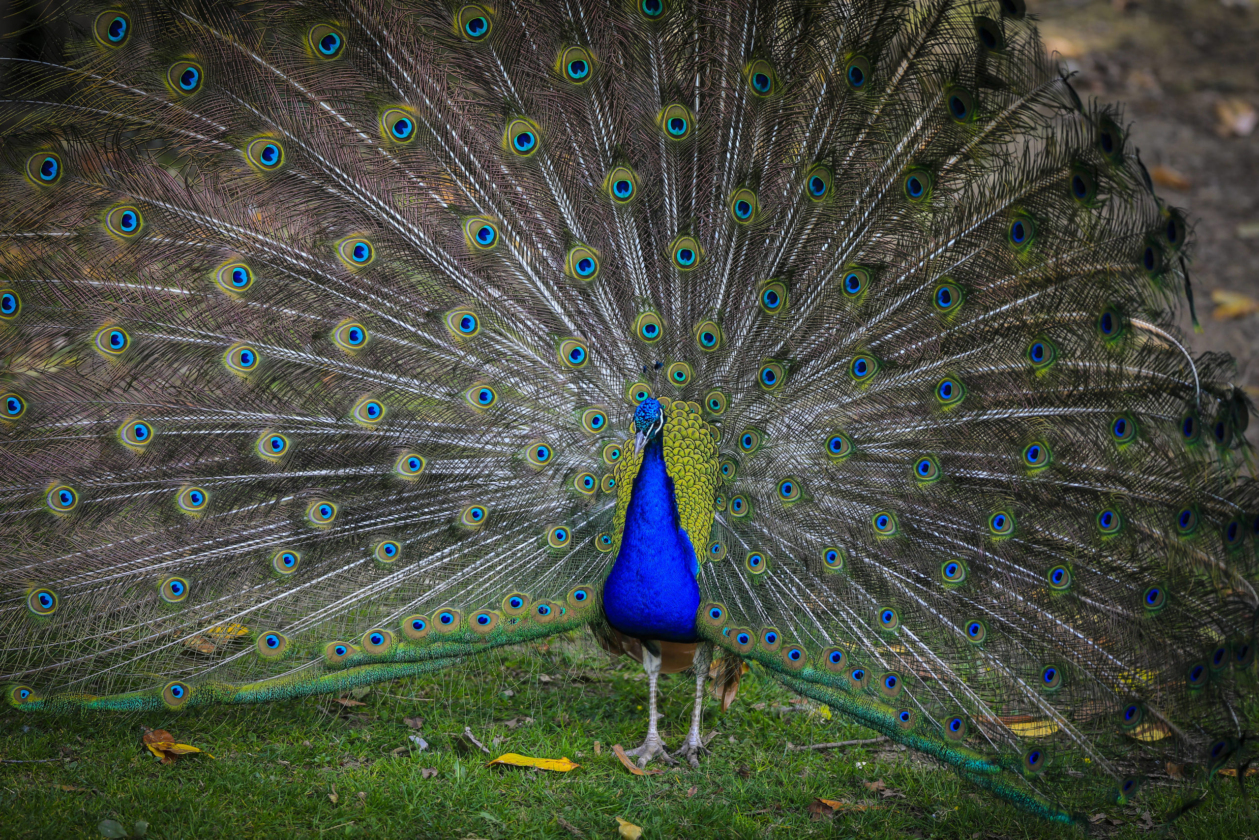 Wer Vögel liebt, kann Aras und Pfauen im Vogelpark Teltow ganz nah kommen.